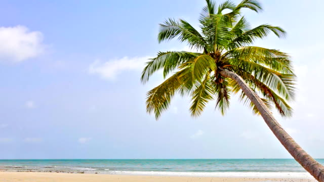 one palm on the sea beach - palm tree stock videos & royalty-free footage