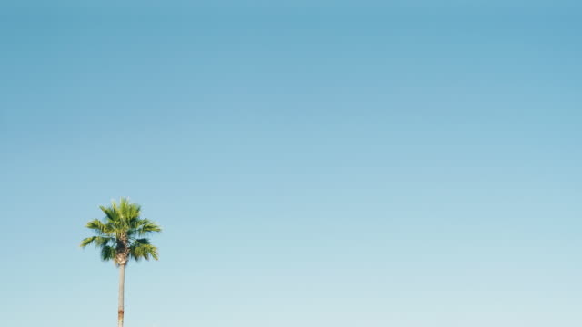 vídeos de stock e filmes b-roll de one palm tree on a beautiful blue sky in california - dispersa