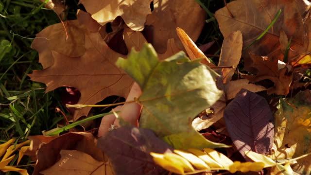 vídeos y material grabado en eventos de stock de de la mano de una persona con hojas de otoño en el parque central - esmalte de uñas rojo