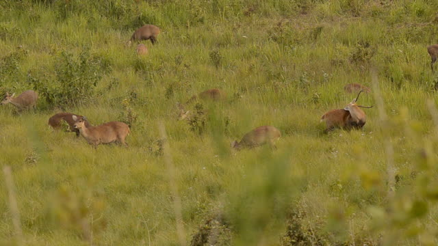 one suspicious male deer grudge - deer family stock videos and b-roll footage