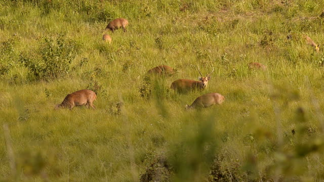 one suspicious male deer in family - deer family stock videos and b-roll footage