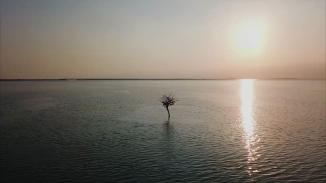 vidéos et rushes de one tree growing in middle of dead sea - paysage marin