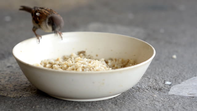 one tree sparrow is gluttonous - bowl stock videos and b-roll footage