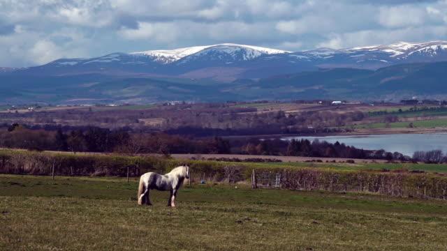 stockvideo's en b-roll-footage met een wit paard in een veld in de buurt van ben wyvis munro mountain schotse highlands uk - heuvellandschap