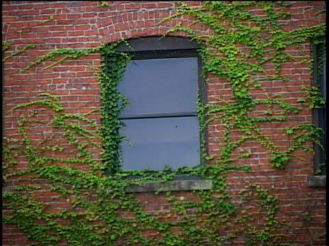 one window on side of red, brick building, with creeping ivy  - brick stock videos & royalty-free footage