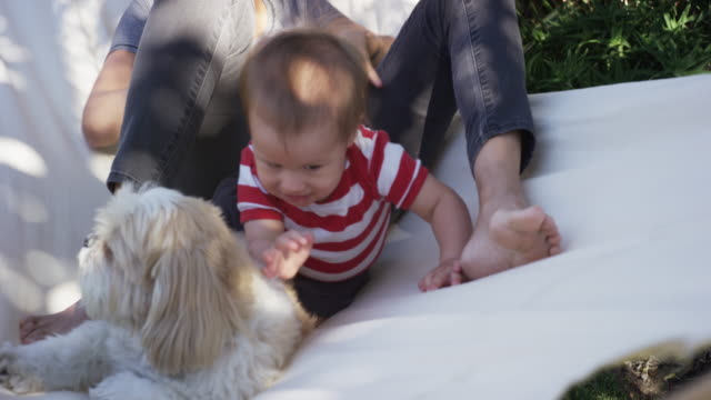 vídeos de stock e filmes b-roll de one year old baby, his mom and dog outside in hammock - cama de rede