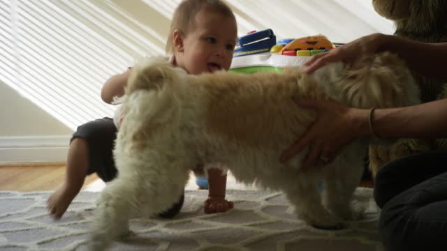 vídeos de stock e filmes b-roll de one year old baby, his mom, his dog and his giant teddy bear - um animal