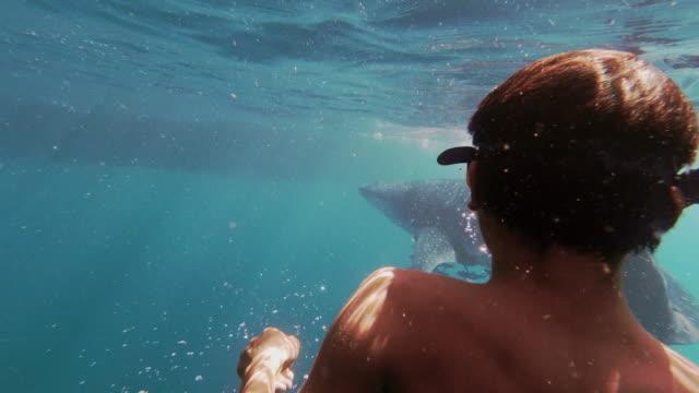 vídeos y material grabado en eventos de stock de one young eco tourist free diving with endangered species whale shark (rhincodon typus) in the sea - animales salvajes