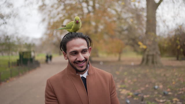 one young man with a parrot on his head - beak stock videos & royalty-free footage