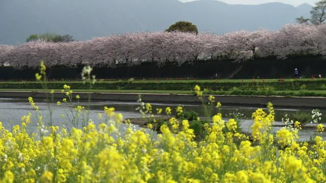 Ongagawa With Flowers, Fukuoka, Japan