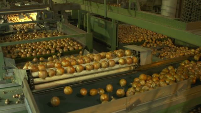 Onions moving along conveyor belts and rollers at processing warehouse
