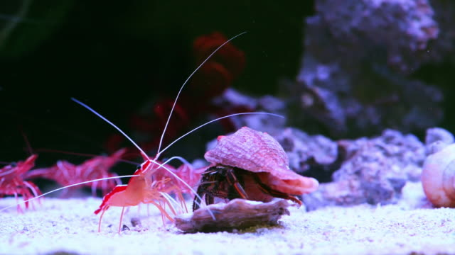 only the strong survive in the ocean - hermit crab stock videos & royalty-free footage