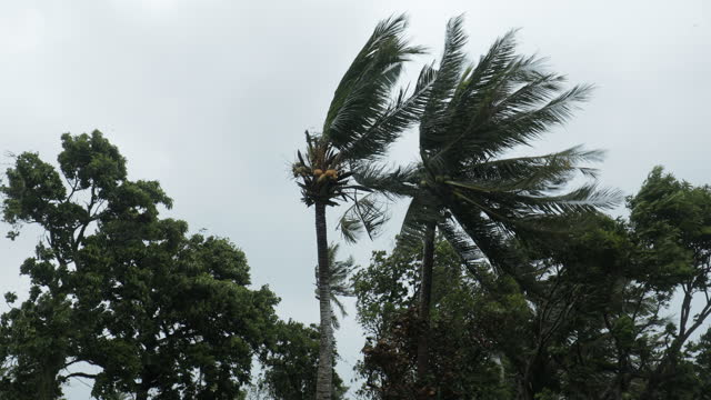 onset of the super typhoon goni - coconut palm tree stock videos & royalty-free footage