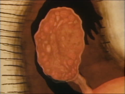 1985 animation oocytogenesis occurring in ovary / oocyte dividing - seductive women stock videos & royalty-free footage