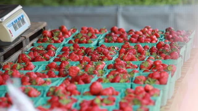open market - strawberries in containers - farmer's market stock videos and b-roll footage