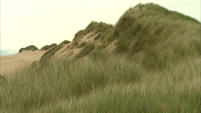 open sand dunes w/ marram grass fg pan up tall dunes w/ grass moving in wind reverse pan no people sites of special scientific interest protected... - marram grass stock videos and b-roll footage