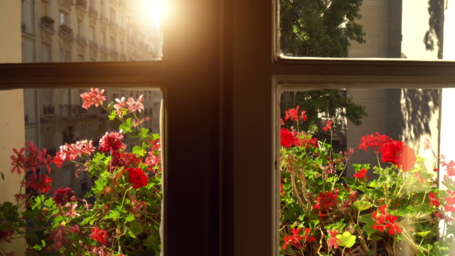 open the window in paris - plant pot stock videos & royalty-free footage