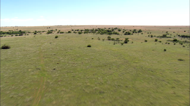 Open Veldt And Cattle  - Aerial View - Orange Free State,  Fezile Dabi District Municipality,  Moqhaka,  South Africa