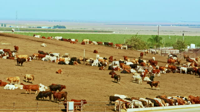 Open-air meat farm near by Coalinga, California, USA