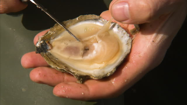 opening an oysters shell - raw footage stock videos & royalty-free footage