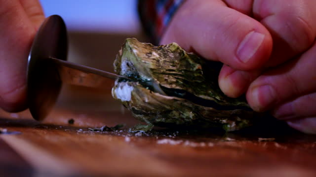 opening fresh oysters with a oyster knife - oyster shell stock videos & royalty-free footage