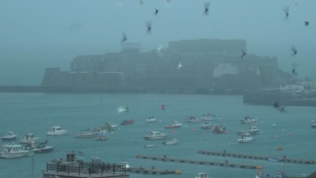 operation to recover body from plane carrying emiliano sala to begin; guernsey: ext wide shot st peter port harbour and buildings in early morning... - guernsey stock videos & royalty-free footage