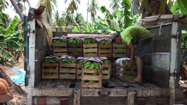 operations of a banana plantation in tecpan de galeana on monday, april 30, 2018. - バナナ点の映像素材/bロール