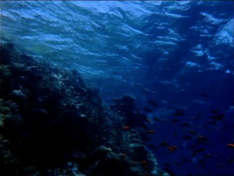 orange and zebra-striped fish swim above a rocky sea floor. - red sea stock videos & royalty-free footage