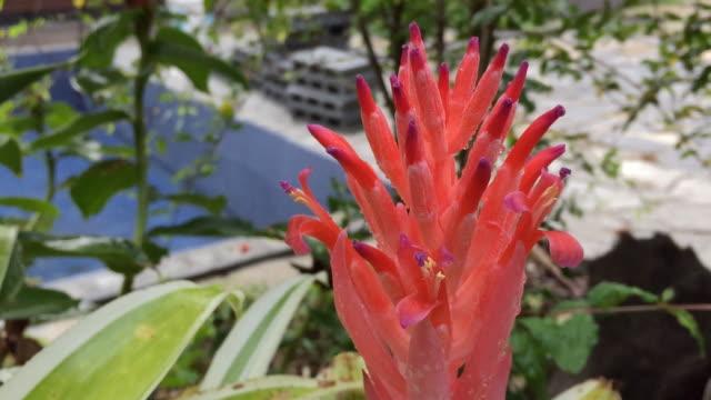 Orange bromeliad flower growing on tree