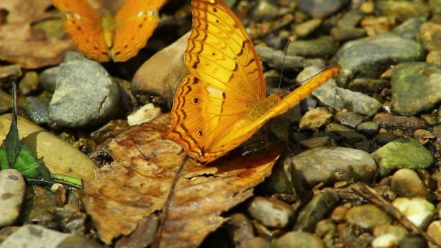 Orange Schmetterling auf dem Boden
