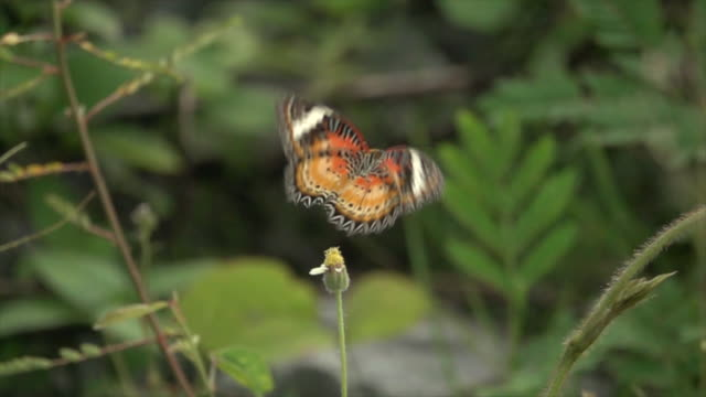 orange butterfly on small flower super slow motion - super slow motion stock videos & royalty-free footage
