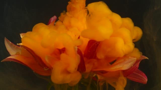 orange gerbera flower with ink flowing underwater - dye stock videos & royalty-free footage