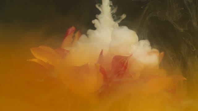 orange gerbera flower with white ink flowing underwater - watercolour painting stock videos & royalty-free footage