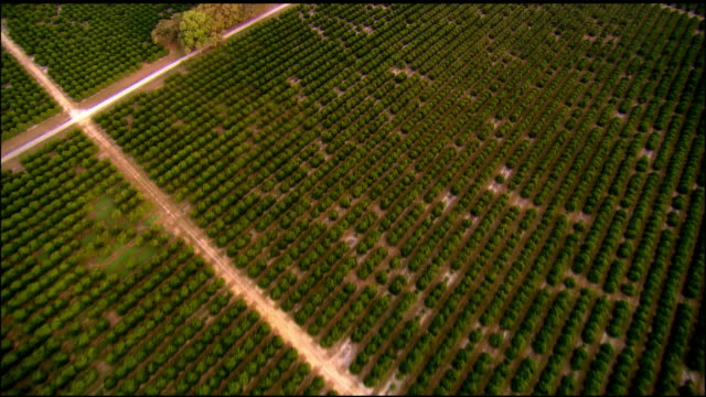 aerial, orange grove, florida, usa - orchard stock videos & royalty-free footage
