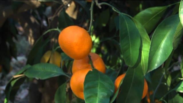 Orange Grove on December 11 2013 in Los Angeles California
