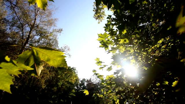 vídeos y material grabado en eventos de stock de orange hojas en otoño con la luz del sol - mancha solar
