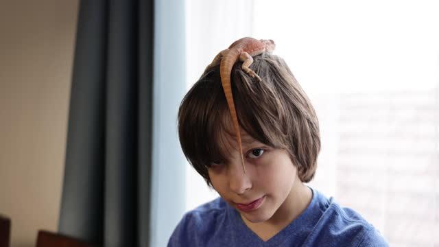 男の子の頭にオレンジトカゲ - 捕らえられた動物点の映像素材/bロール