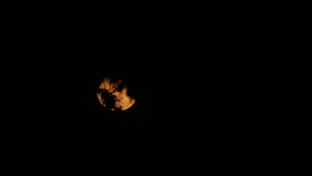 Orange Moon through silhouette trees, static