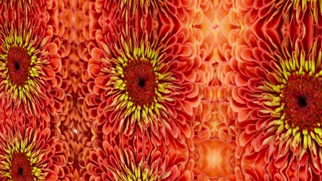 orange natural floral pattern - natural pattern stock videos and b-roll footage