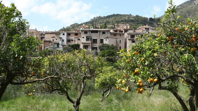 orange orchard in front of a Spanish town