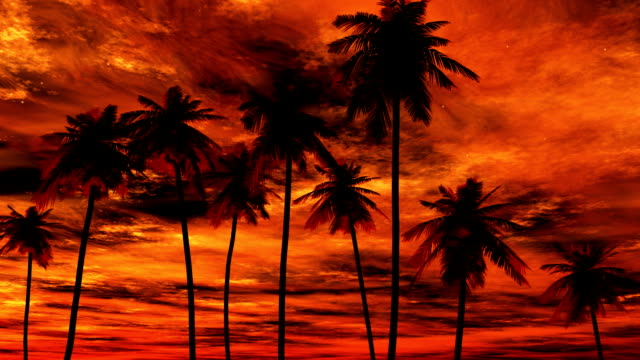 Orange skys over Palm Trees