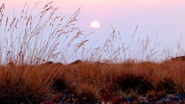 Orange sunset with grass Summit Steens Mountain Near Malhuer Wildlife Refuge 7
