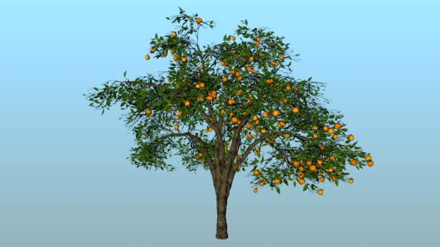 vídeos y material grabado en eventos de stock de naranja árbol de flor abriéndose - mate técnica de vídeo