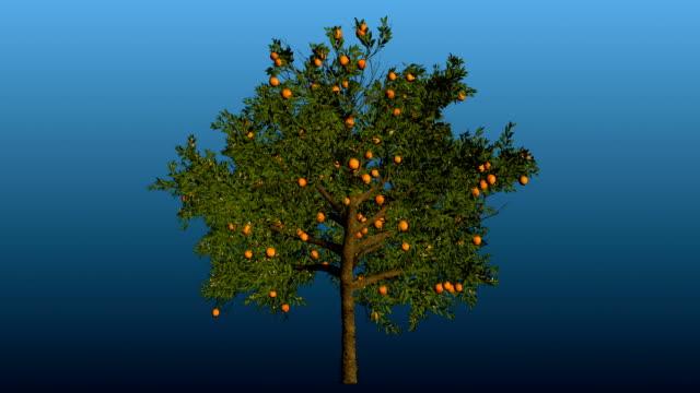 オレンジの木の花にマット - オレンジの木点の映像素材/bロール