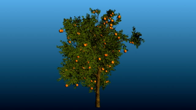 orange tree rotation blooming with matte - matte stock videos & royalty-free footage