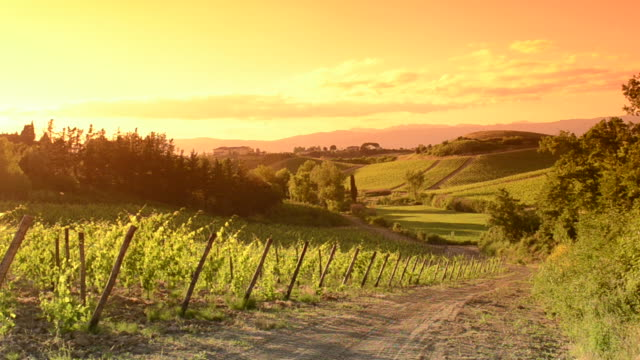 orange vineyard at sunset - tuscany stock videos and b-roll footage