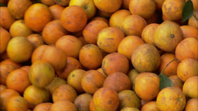 oranges roll along a conveyor belt. - ascorbic acid stock videos & royalty-free footage