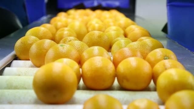 orange - orange frucht stock-videos und b-roll-filmmaterial