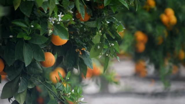 oranges - オレンジ点の映像素材/bロール