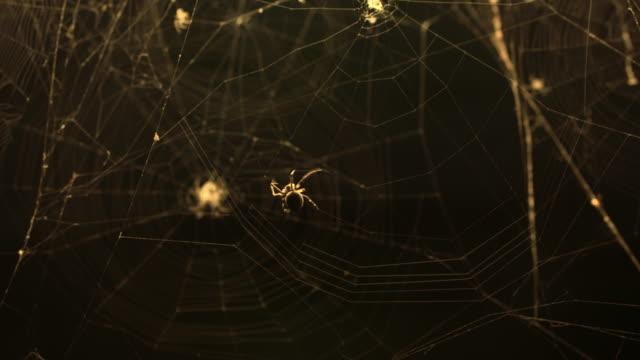 orb web spiders (araneus diadematus) - street light stock videos & royalty-free footage